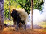Young Elephant trying to get rid of insect at Chitwan Hattisar (Sauraha Elephant Breeding Centre)